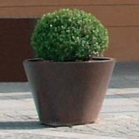 Pitocca jardinera